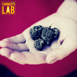 Cannabis Seeds Toronto, ON. Farmers Lab Seeds is your #1 supplier to growing Cannabis in Toronto, Ontario.