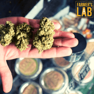 Cannabis Seeds Shipped Directly to Your Door in Wyoming, OH. Farmers Lab Seeds is your #1 supplier to growing Cannabis in Wyoming, Ohio.