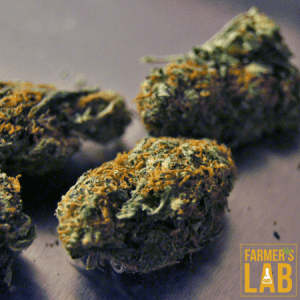 Marijuana Seeds Shipped Directly to Your Door. Farmers Lab Seeds is your #1 supplier to growing Marijuana in Alberta.