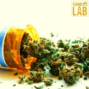 Marijuana Seeds Shipped Directly to Avondale, AZ. Farmers Lab Seeds is your #1 supplier to growing Marijuana in Avondale, Arizona.