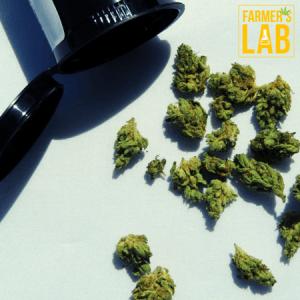 Marijuana Seeds Shipped Directly to Barnard, TN. Farmers Lab Seeds is your #1 supplier to growing Marijuana in Barnard, Tennessee.