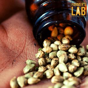 Marijuana Seeds Shipped Directly to Beatrice, NE. Farmers Lab Seeds is your #1 supplier to growing Marijuana in Beatrice, Nebraska.
