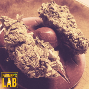 Marijuana Seeds Shipped Directly to Belleterre, QC. Farmers Lab Seeds is your #1 supplier to growing Marijuana in Belleterre, Quebec.