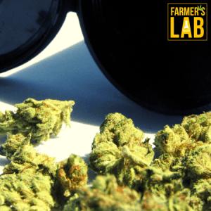 Marijuana Seeds Shipped Directly to Black Jack, MO. Farmers Lab Seeds is your #1 supplier to growing Marijuana in Black Jack, Missouri.
