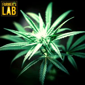 Marijuana Seeds Shipped Directly to Boaz, AL. Farmers Lab Seeds is your #1 supplier to growing Marijuana in Boaz, Alabama.