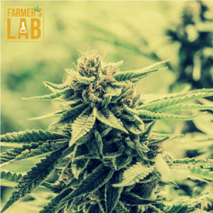 Marijuana Seeds Shipped Directly to Brooks, AB. Farmers Lab Seeds is your #1 supplier to growing Marijuana in Brooks, Alberta.