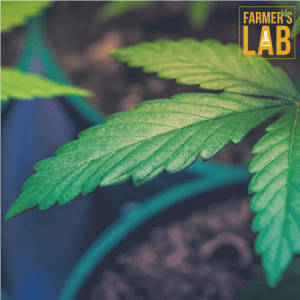 Marijuana Seeds Shipped Directly to Calumet Park, IL. Farmers Lab Seeds is your #1 supplier to growing Marijuana in Calumet Park, Illinois.