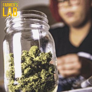 Marijuana Seeds Shipped Directly to Catalina, AZ. Farmers Lab Seeds is your #1 supplier to growing Marijuana in Catalina, Arizona.