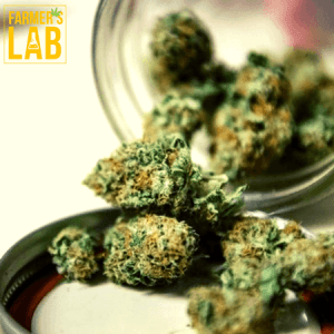 Marijuana Seeds Shipped Directly to Chateauguay, QC. Farmers Lab Seeds is your #1 supplier to growing Marijuana in Chateauguay, Quebec.
