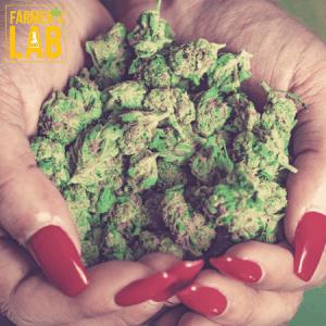 Marijuana Seeds Shipped Directly to Davie, FL. Farmers Lab Seeds is your #1 supplier to growing Marijuana in Davie, Florida.