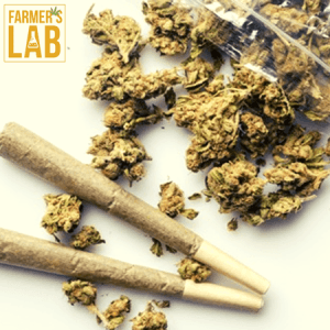 Marijuana Seeds Shipped Directly to Disraeli, QC. Farmers Lab Seeds is your #1 supplier to growing Marijuana in Disraeli, Quebec.