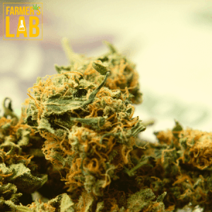 Marijuana Seeds Shipped Directly to East Orange, FL. Farmers Lab Seeds is your #1 supplier to growing Marijuana in East Orange, Florida.