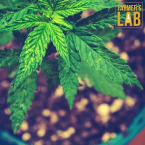 Marijuana Seeds Shipped Directly to El Mirage, AZ. Farmers Lab Seeds is your #1 supplier to growing Marijuana in El Mirage, Arizona.