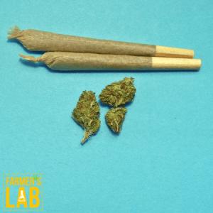 Marijuana Seeds Shipped Directly to Eunice, LA. Farmers Lab Seeds is your #1 supplier to growing Marijuana in Eunice, Louisiana.