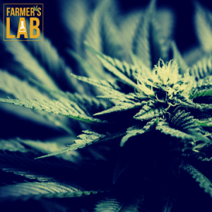 Marijuana Seeds Shipped Directly to Gracefield, QC. Farmers Lab Seeds is your #1 supplier to growing Marijuana in Gracefield, Quebec.
