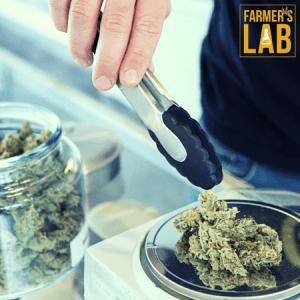 Marijuana Seeds Shipped Directly to Huntsville, TX. Farmers Lab Seeds is your #1 supplier to growing Marijuana in Huntsville, Texas.