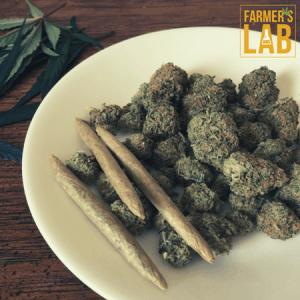Marijuana Seeds Shipped Directly to Jerome, ID. Farmers Lab Seeds is your #1 supplier to growing Marijuana in Jerome, Idaho.