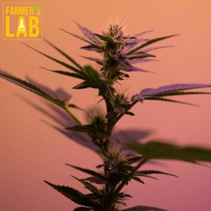 Marijuana Seeds Shipped Directly to Kalamazoo, MI. Farmers Lab Seeds is your #1 supplier to growing Marijuana in Kalamazoo, Michigan.