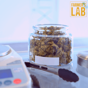 Marijuana Seeds Shipped Directly to La Junta, CO. Farmers Lab Seeds is your #1 supplier to growing Marijuana in La Junta, Colorado.