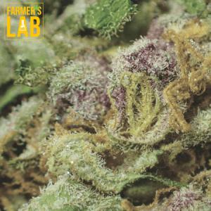 Marijuana Seeds Shipped Directly to La Vista, NE. Farmers Lab Seeds is your #1 supplier to growing Marijuana in La Vista, Nebraska.