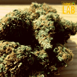 Marijuana Seeds Shipped Directly to Lac-Megantic, QC. Farmers Lab Seeds is your #1 supplier to growing Marijuana in Lac-Megantic, Quebec.