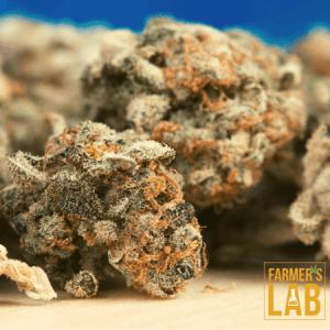 Marijuana Seeds Shipped Directly to Lackawanna, NY. Farmers Lab Seeds is your #1 supplier to growing Marijuana in Lackawanna, New York.
