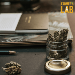 Marijuana Seeds Shipped Directly to Liberal, KS. Farmers Lab Seeds is your #1 supplier to growing Marijuana in Liberal, Kansas.