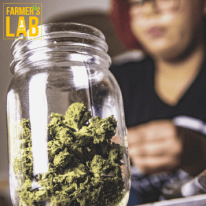 Marijuana Seeds Shipped Directly to Your Door. Farmers Lab Seeds is your #1 supplier to growing Marijuana in Louisiana.