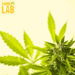 Marijuana Seeds Shipped Directly to Merritt, BC. Farmers Lab Seeds is your #1 supplier to growing Marijuana in Merritt, British Columbia.