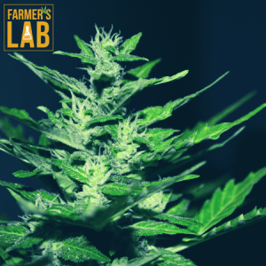Marijuana Seeds Shipped Directly to Your Door. Farmers Lab Seeds is your #1 supplier to growing Marijuana in Oklahoma.