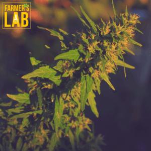Marijuana Seeds Shipped Directly to Orange Lake, NY. Farmers Lab Seeds is your #1 supplier to growing Marijuana in Orange Lake, New York.