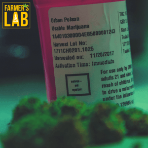 Marijuana Seeds Shipped Directly to Oregon, OH. Farmers Lab Seeds is your #1 supplier to growing Marijuana in Oregon, Ohio.
