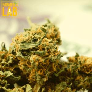 Marijuana Seeds Shipped Directly to Oswego, NY. Farmers Lab Seeds is your #1 supplier to growing Marijuana in Oswego, New York.