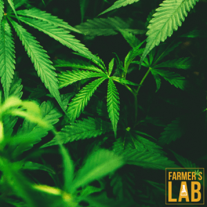 Marijuana Seeds Shipped Directly to Parksville, BC. Farmers Lab Seeds is your #1 supplier to growing Marijuana in Parksville, British Columbia.