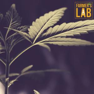 Marijuana Seeds Shipped Directly to Peekskill, NY. Farmers Lab Seeds is your #1 supplier to growing Marijuana in Peekskill, New York.