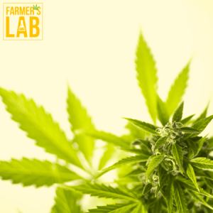 Marijuana Seeds Shipped Directly to Prospect, CT. Farmers Lab Seeds is your #1 supplier to growing Marijuana in Prospect, Connecticut.
