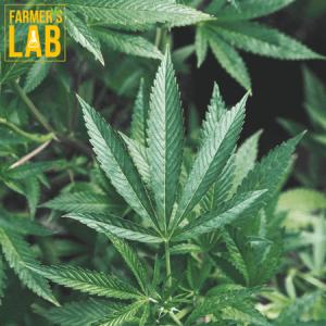 Marijuana Seeds Shipped Directly to Pulaski, TN. Farmers Lab Seeds is your #1 supplier to growing Marijuana in Pulaski, Tennessee.
