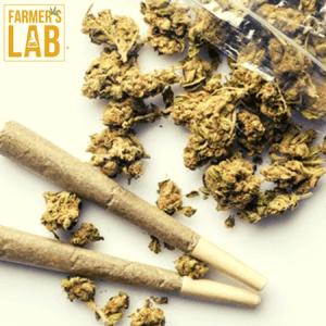 Marijuana Seeds Shipped Directly to Radford, VA. Farmers Lab Seeds is your #1 supplier to growing Marijuana in Radford, Virginia.