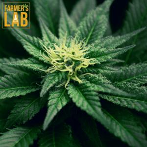 Marijuana Seeds Shipped Directly to Sheridan, WY. Farmers Lab Seeds is your #1 supplier to growing Marijuana in Sheridan, Wyoming.