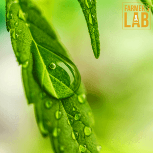 Marijuana Seeds Shipped Directly to St. Paul, MN. Farmers Lab Seeds is your #1 supplier to growing Marijuana in St. Paul, Minnesota.