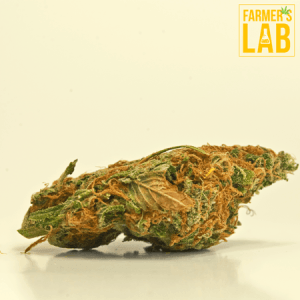 Marijuana Seeds Shipped Directly to Your Door. Farmers Lab Seeds is your #1 supplier to growing Marijuana in Tennessee.