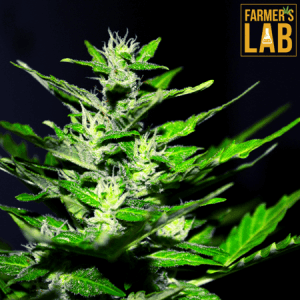 Marijuana Seeds Shipped Directly to Tuskegee-Milstead, AL. Farmers Lab Seeds is your #1 supplier to growing Marijuana in Tuskegee-Milstead, Alabama.
