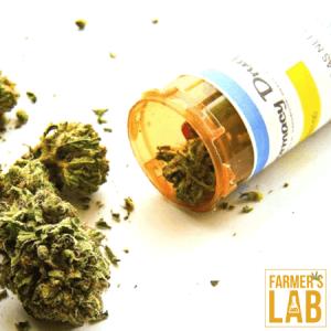 Marijuana Seeds Shipped Directly to Washington, UT. Farmers Lab Seeds is your #1 supplier to growing Marijuana in Washington, Utah.