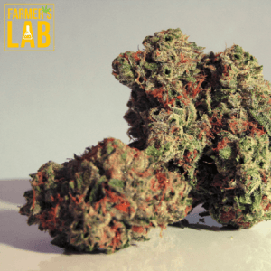 Marijuana Seeds Shipped Directly to Waterloo, QC. Farmers Lab Seeds is your #1 supplier to growing Marijuana in Waterloo, Quebec.
