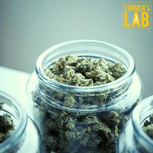 Marijuana Seeds Shipped Directly to Wichita, KS. Farmers Lab Seeds is your #1 supplier to growing Marijuana in Wichita, Kansas.