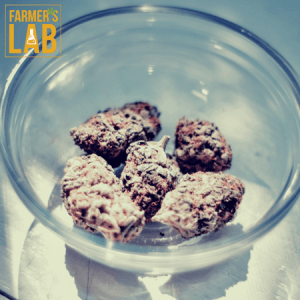 Weed Seeds Shipped Directly to Calverton, MD. Farmers Lab Seeds is your #1 supplier to growing weed in Calverton, Maryland.
