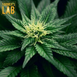 Weed Seeds Shipped Directly to London, ON. Farmers Lab Seeds is your #1 supplier to growing weed in London, Ontario.