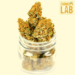 Weed Seeds Shipped Directly to Your Door. Farmers Lab Seeds is your #1 supplier to growing weed in New Brunswick.