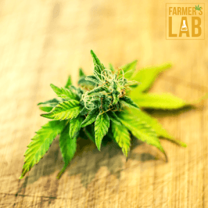 Weed Seeds Shipped Directly to North Ogeechee, GA. Farmers Lab Seeds is your #1 supplier to growing weed in North Ogeechee, Georgia.