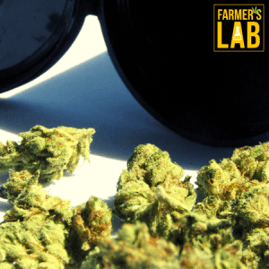 Weed Seeds Shipped Directly to Northwest Harborcreek, PA. Farmers Lab Seeds is your #1 supplier to growing weed in Northwest Harborcreek, Pennsylvania.